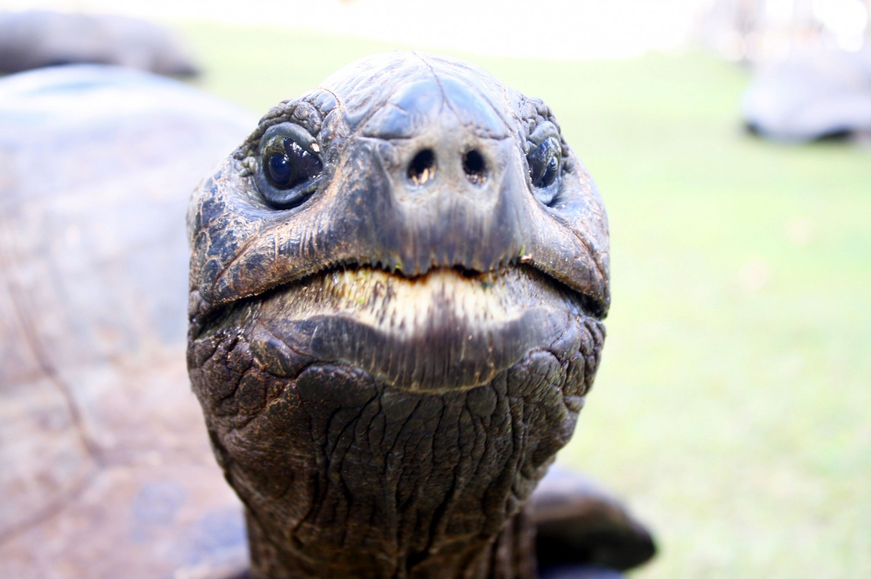 Seychellen Riesenschildkröten