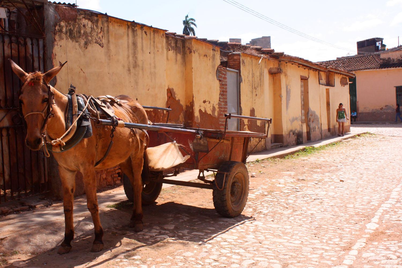 Kutsche in Trinidad