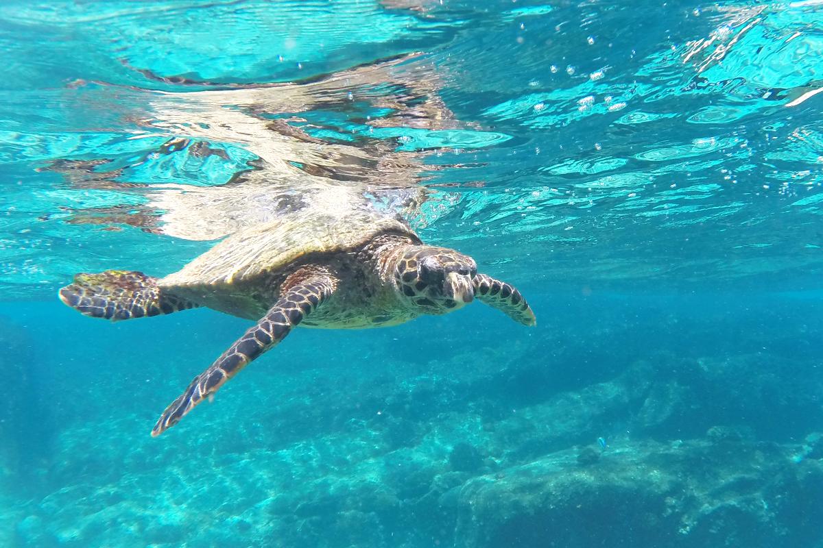 Seychellen Reiseblog Nevis Ernesta Boat Excursions La Digue