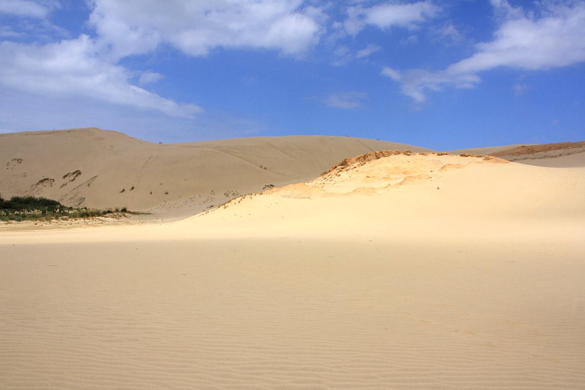Giant Sand Dunes Northland Neuseeland