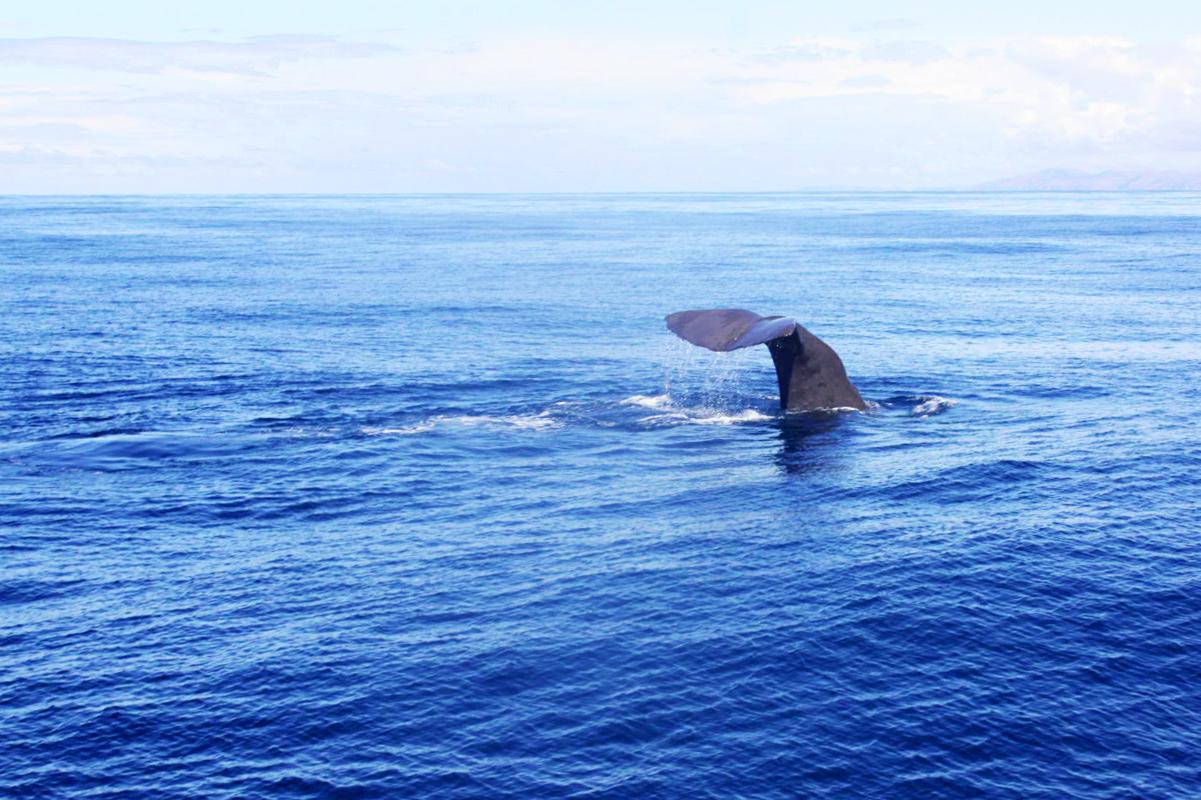 Kaikoura Whale Watching, Neuseeland, Wale