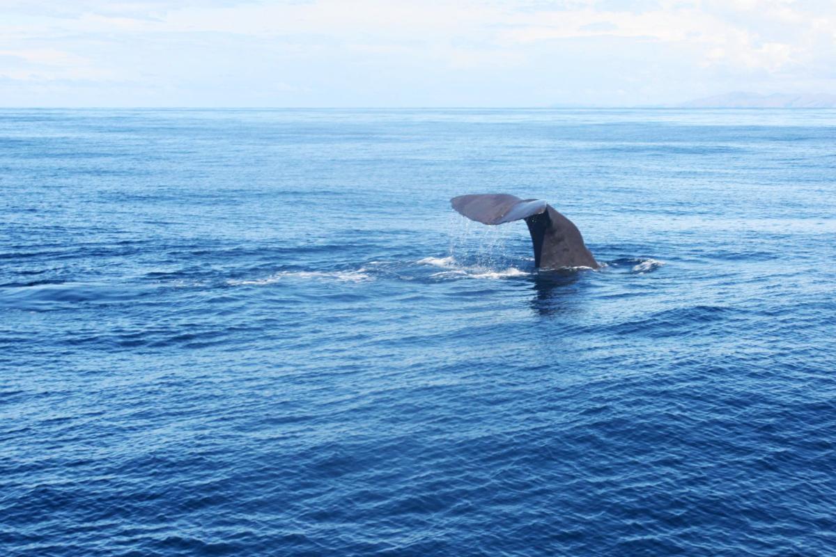 kaikoura Whale Watching, Neuseeland, Südinsel