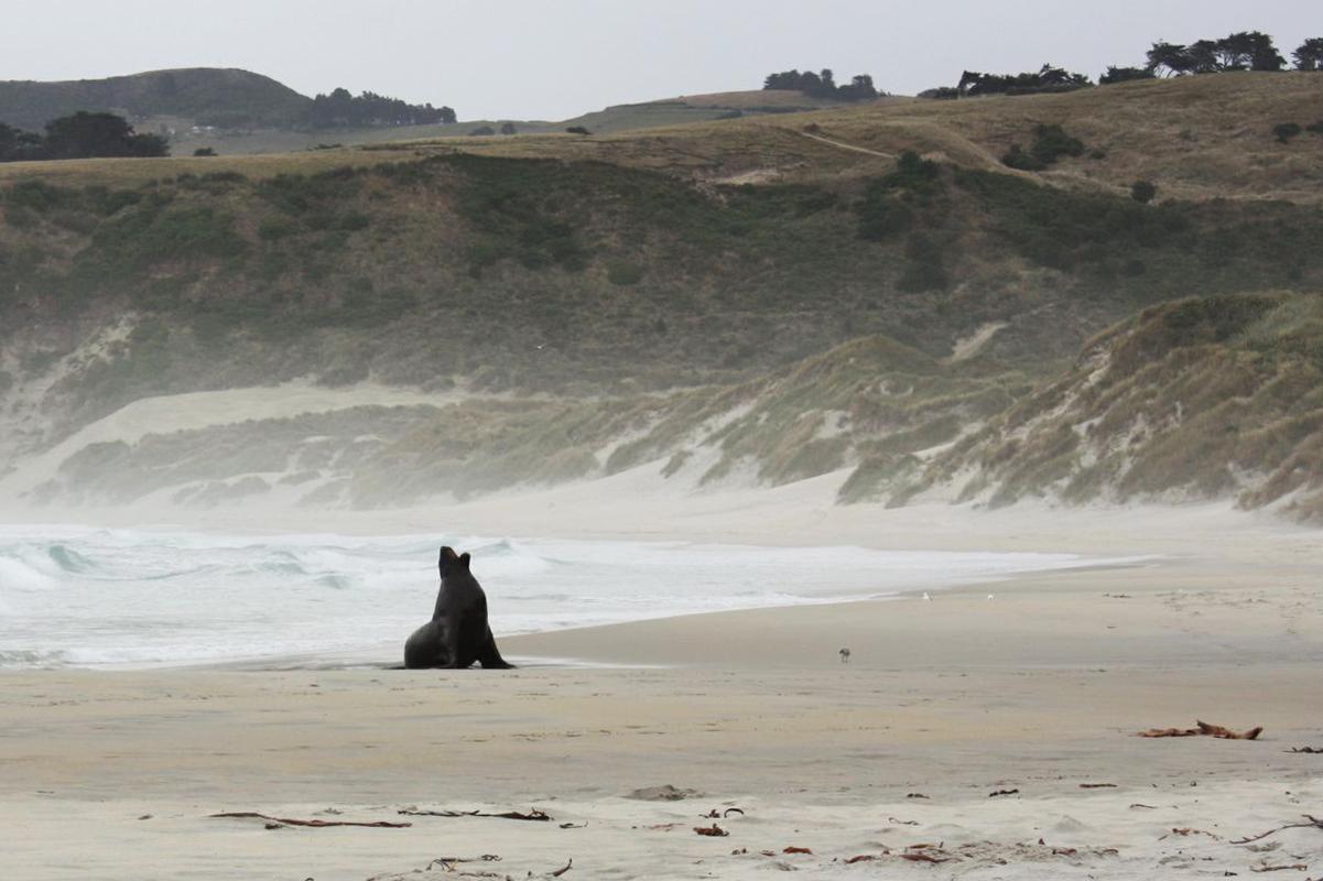 Neuseeland_Suedinsel_Dunedin_Sandfly_Bucht