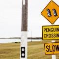 Oamaru Neuseeland Pinguine