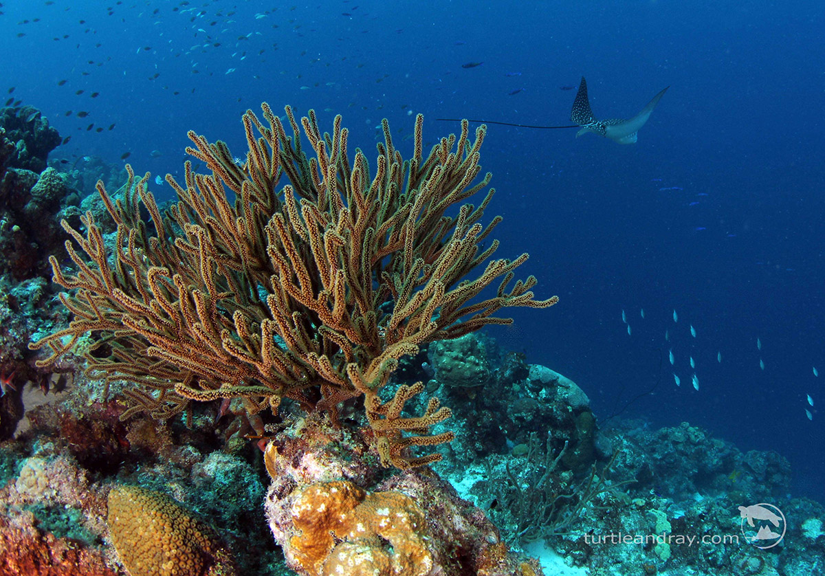 Tauchen auf Curacao mit Ocean Encounters, Karibik