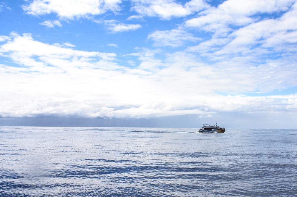 Kaikoura Whale Watching, Südinsel Neuseeland