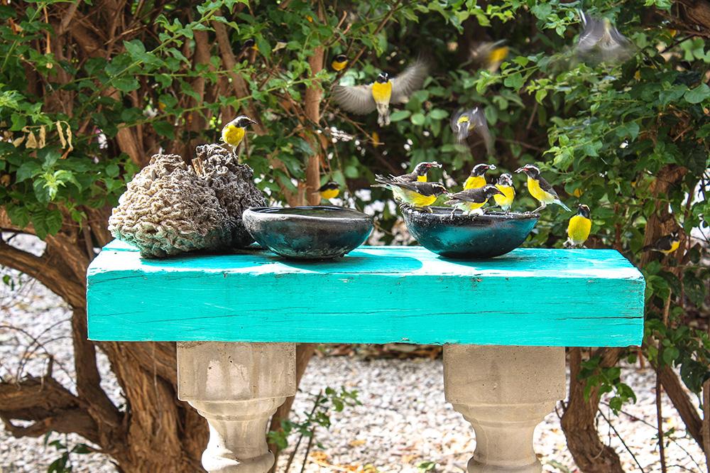 Die flinken Zuckervögel