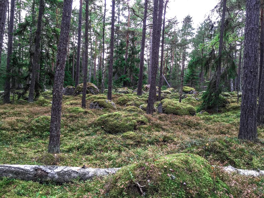 Lahemaa Nationalpark, Estland