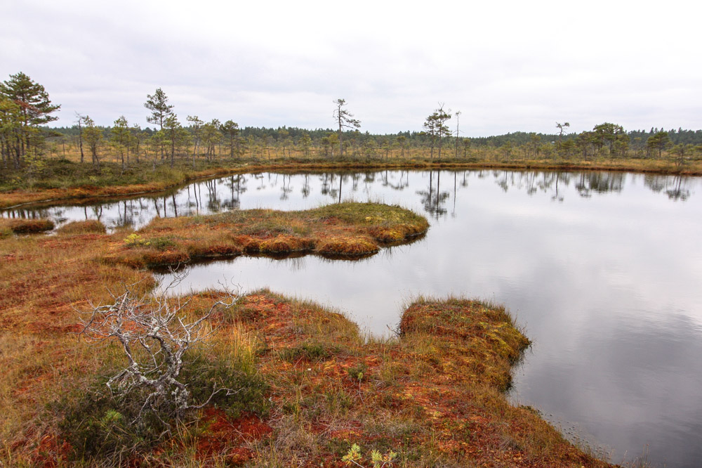 Estland Reisebericht: Soomaa Nationalpark Estland, Moorschuhwanderung