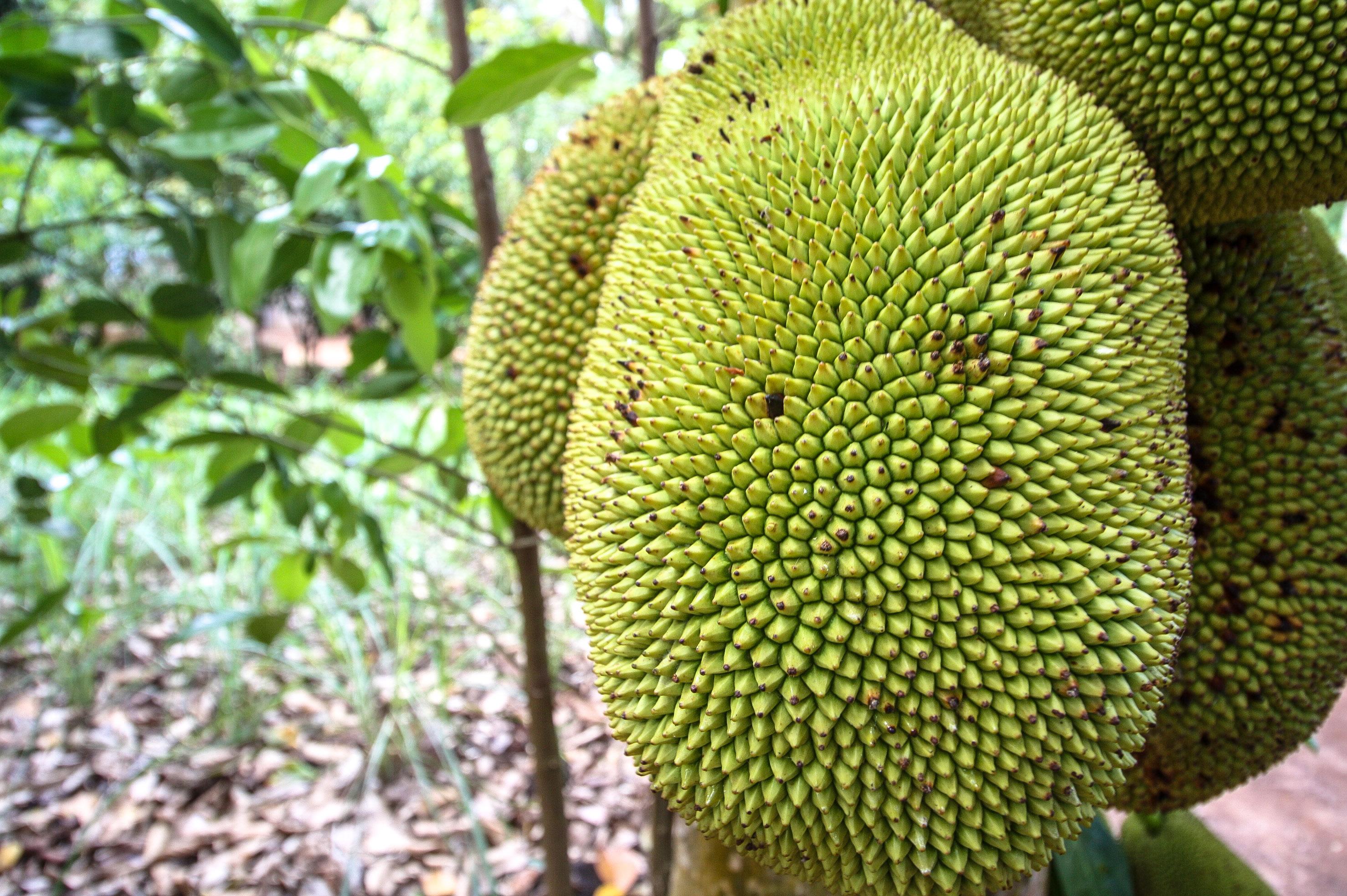 Jackfruit Spice Tour Sansibar
