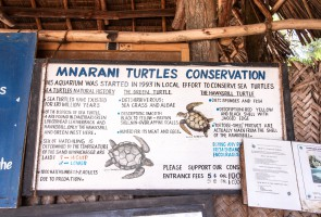 Mnarani Marine Turtles Conservation Zanzibar