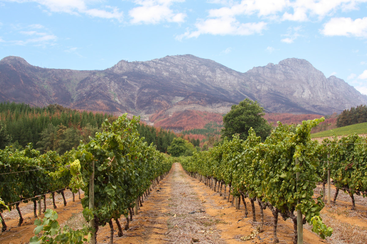 Stellenbosch Weingebiet