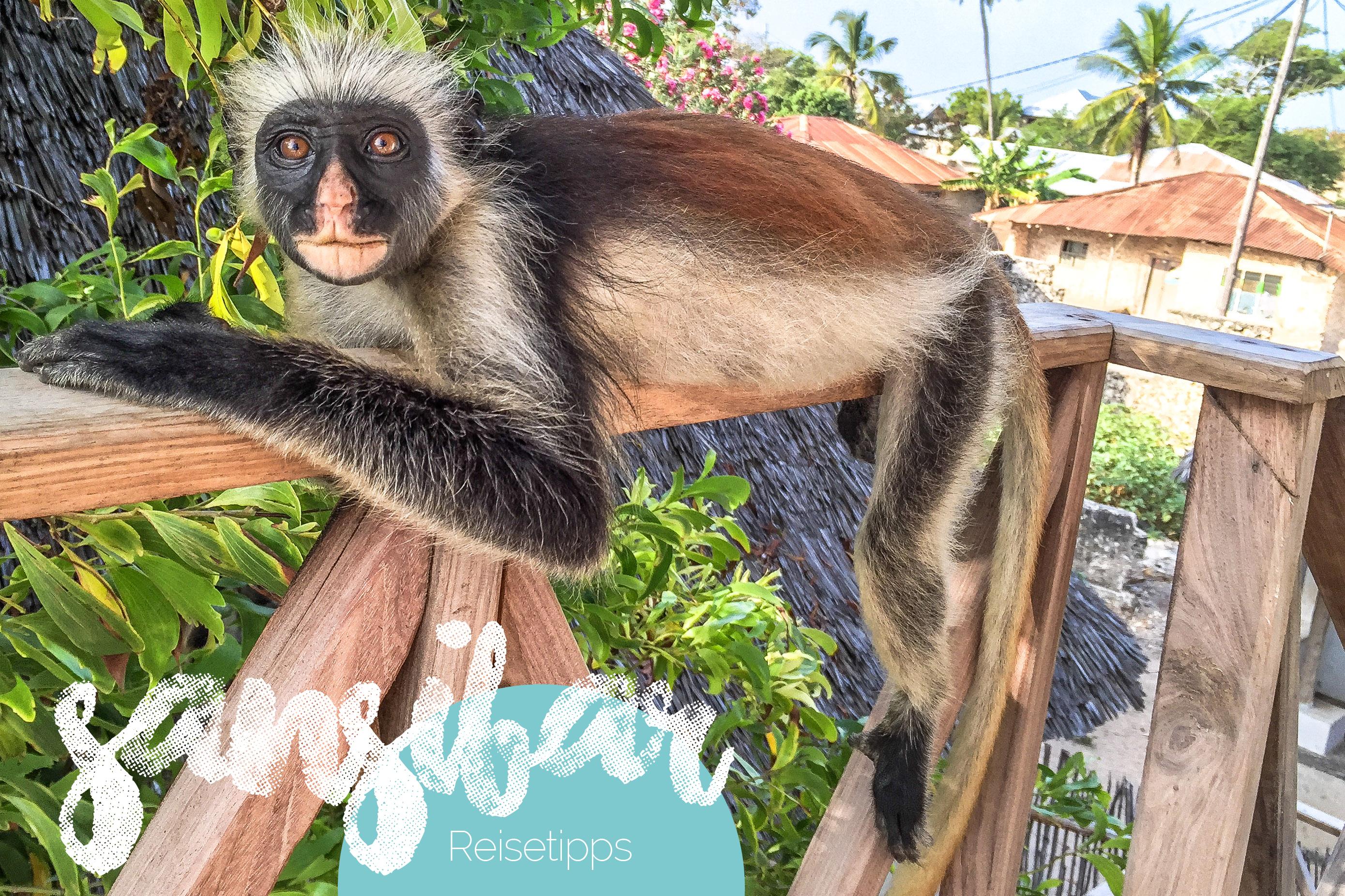 Sansibar Reisetipps & Reise Infos