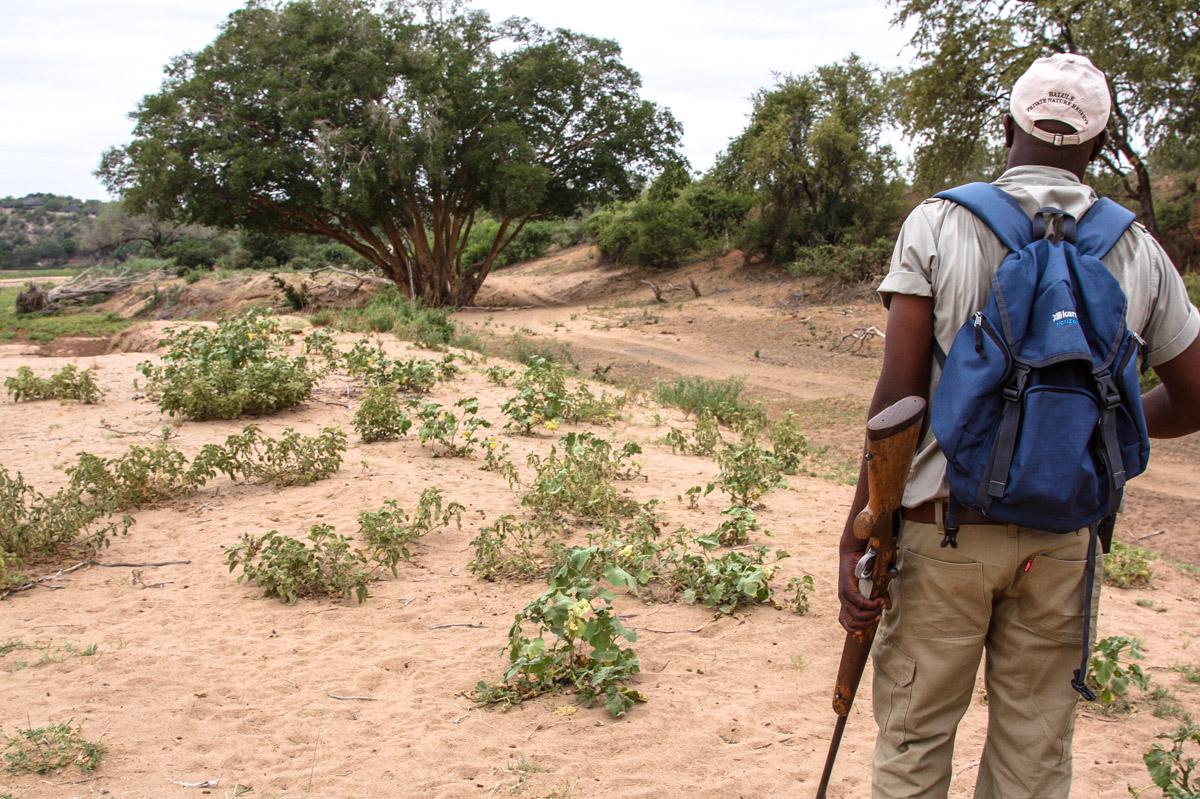 Walking Safari mit Opua im Balule Game Reserve