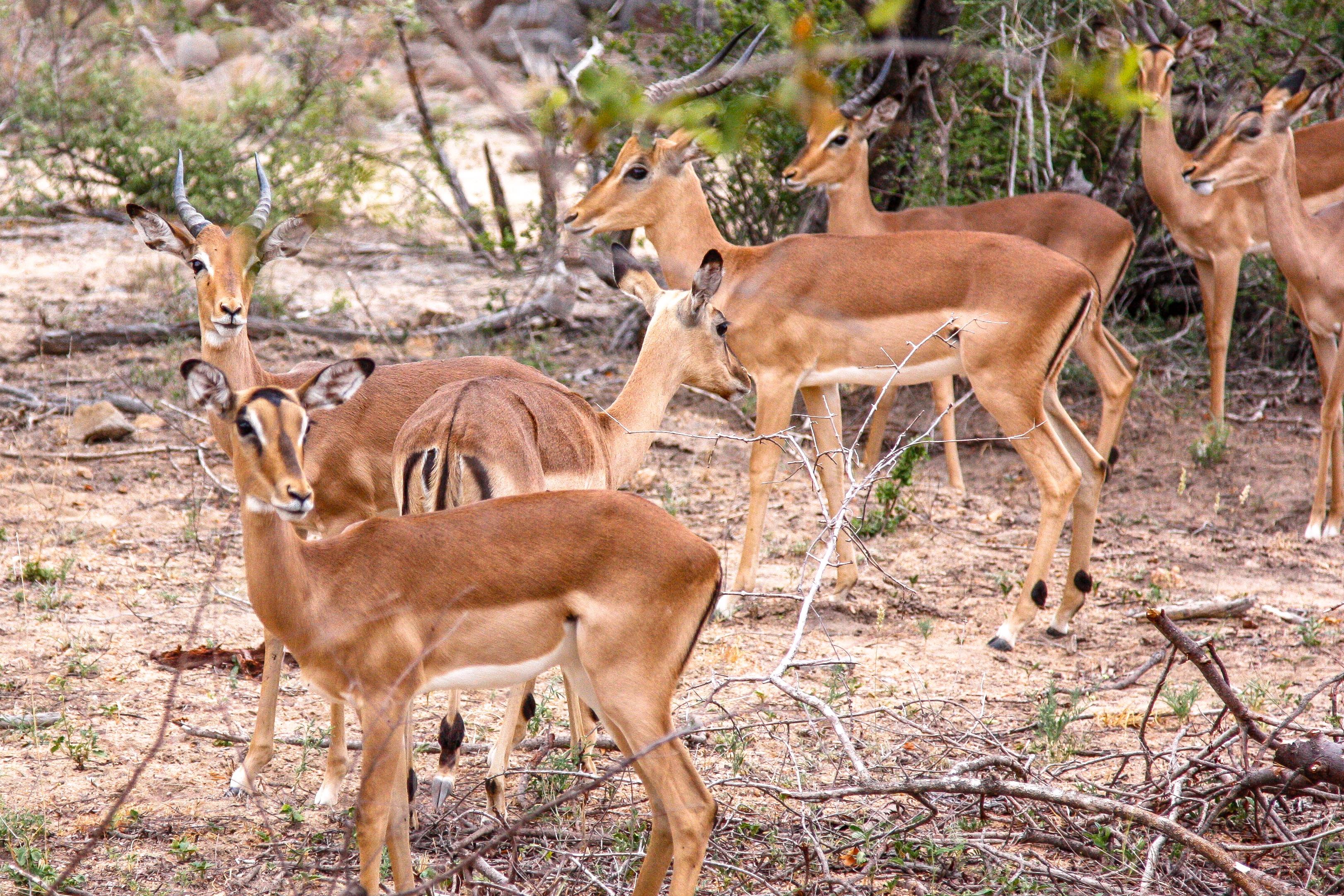 Südafrika-Safari-Balule-Game-reserve_MG_5672