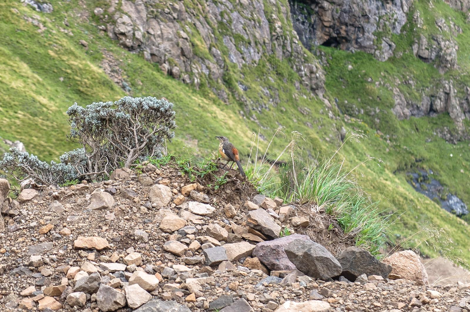 Drakensberge Südafrika, Sani Pass