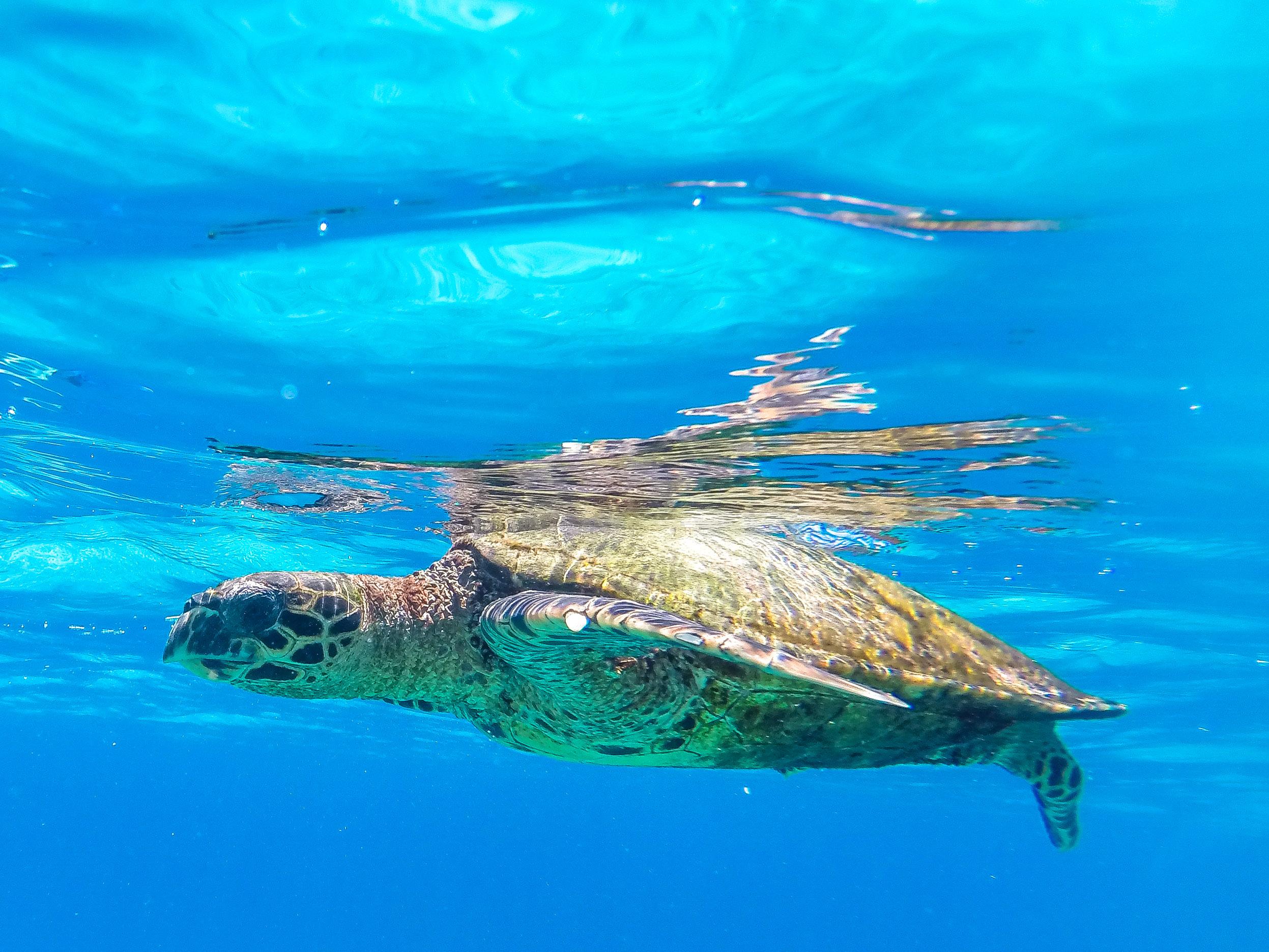 Schnorcheln bei Coco Island, Seychellen