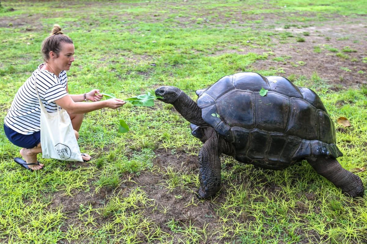 Die faszinierenden Aldabra-Riesenschildkröten