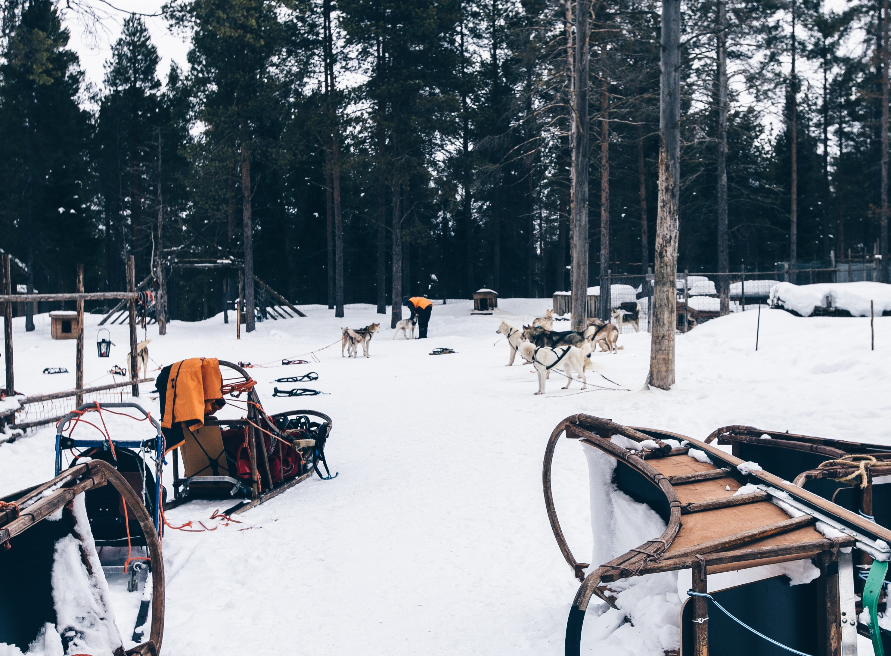Levi Husky Park, Winterurlaub in Lappland