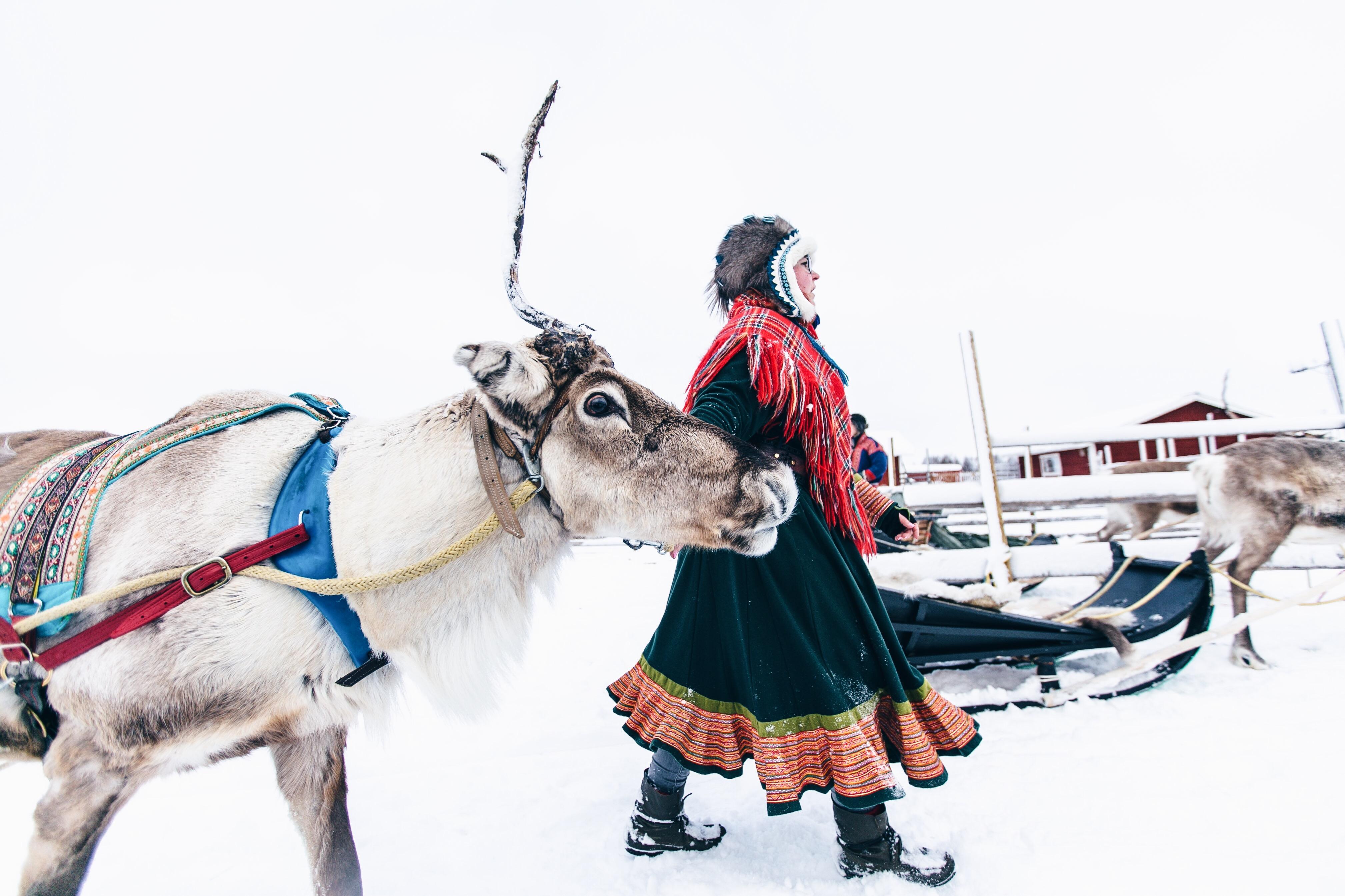 Ounaskievari Reindeer Farm, Rentiere in Levi, Lappland, Rentierschlitten fahren