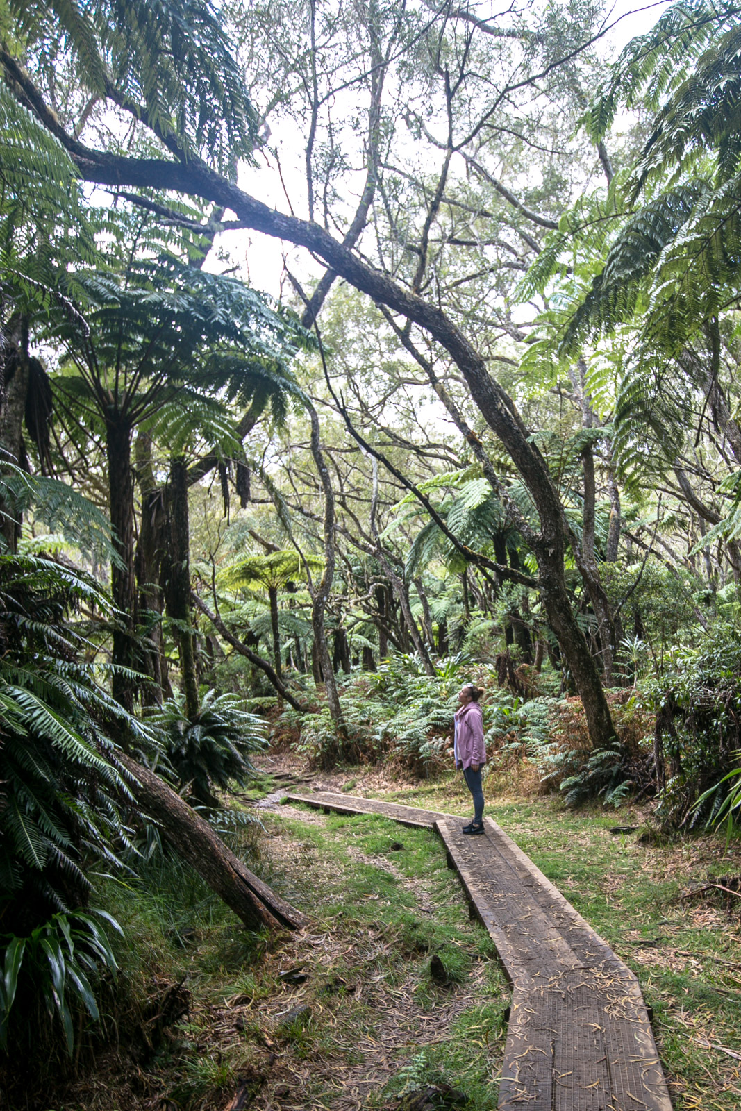 Trou de Fer Wanderung, La Réunion