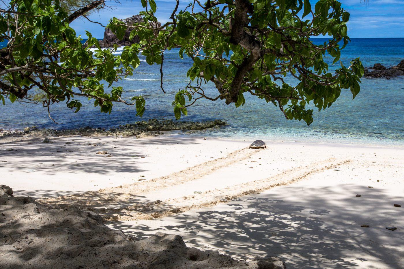 Cousin Island, Seychellen, Ausflüge Seychellen, Ausflüge Praslin, Bootstouren Seychellen, Naturschutz Seychellen