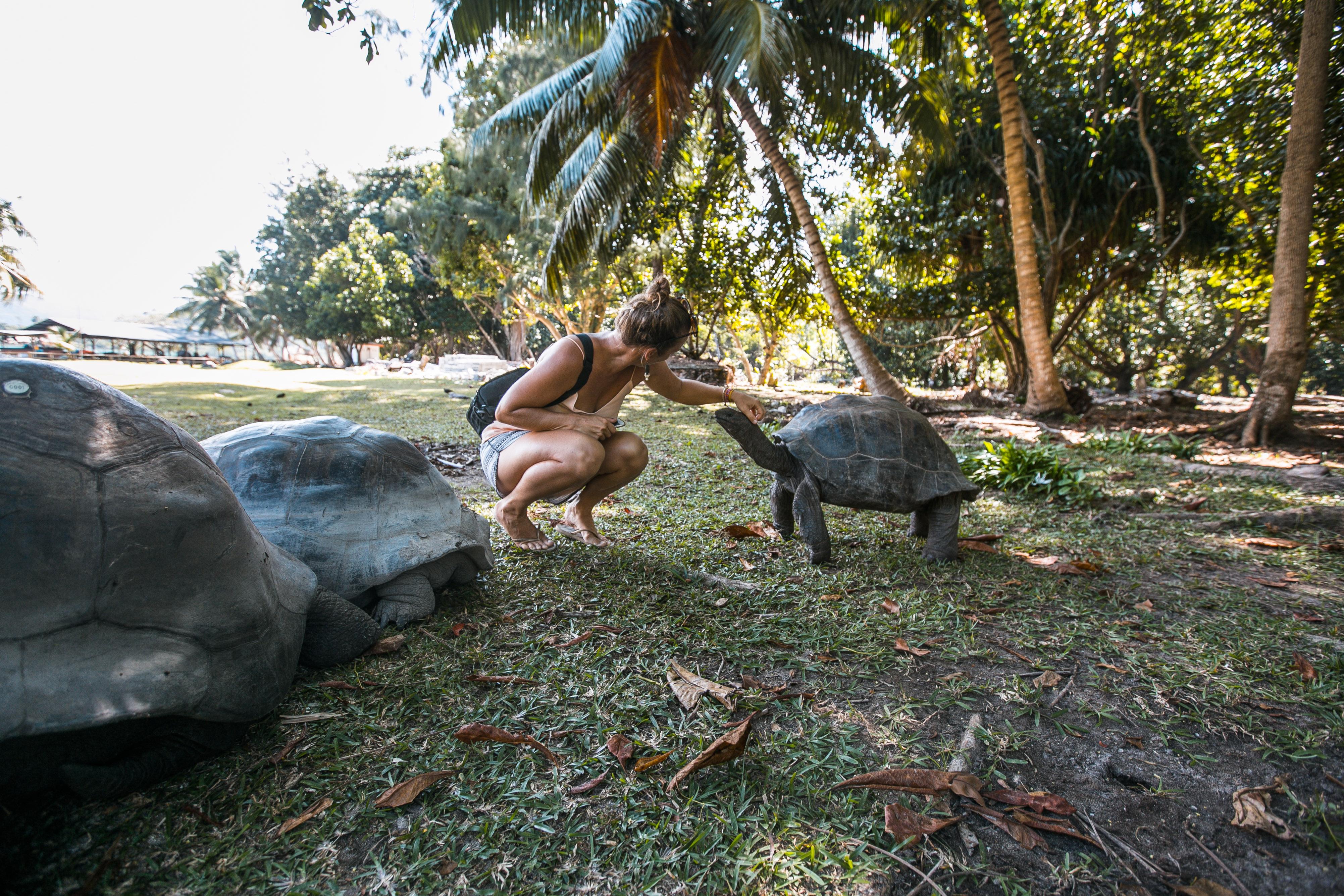 Curieuse Seychellen, Tipps Praslin, Ausflüge auf Praslin, Highlights, Riesenschildkröten