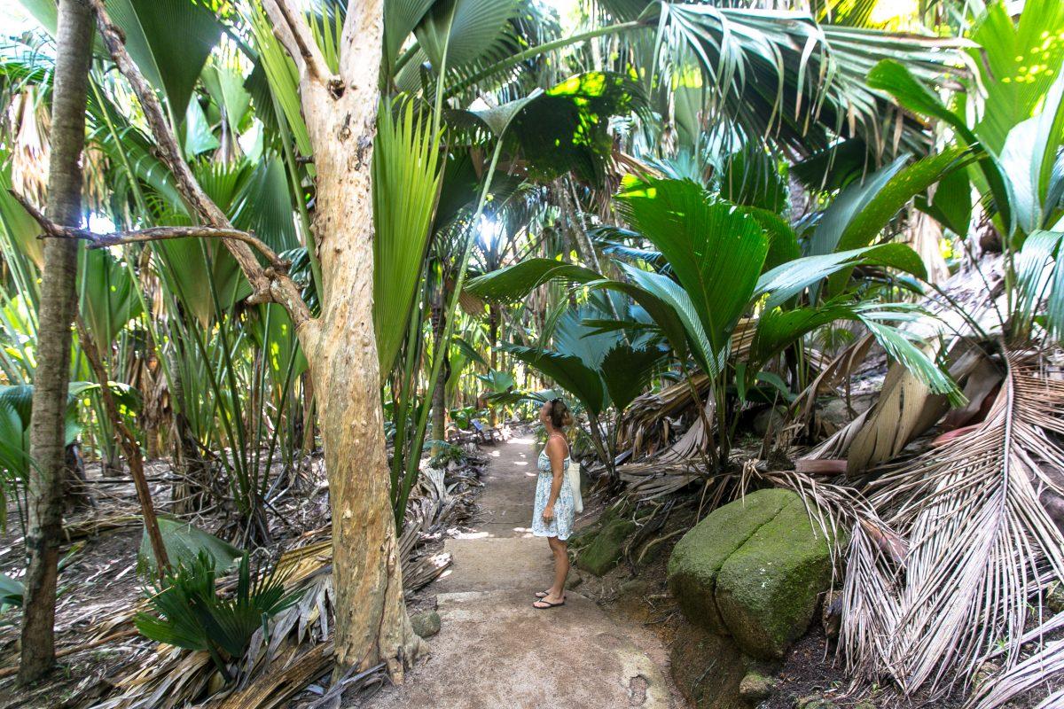 Praslin sehenswürdigkeiten, Coco de mer, Vallée de Mai