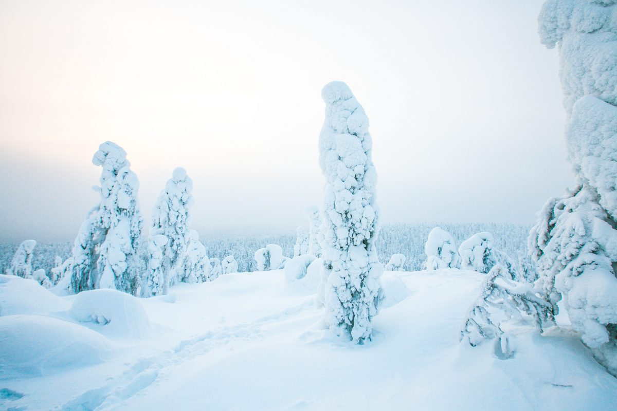 Finnland im Winter, Tipps, Vuokatti, Skifahren, Snowboarden, Husky, Winterabenteuer. Winterurlaub in Finnland Highlights