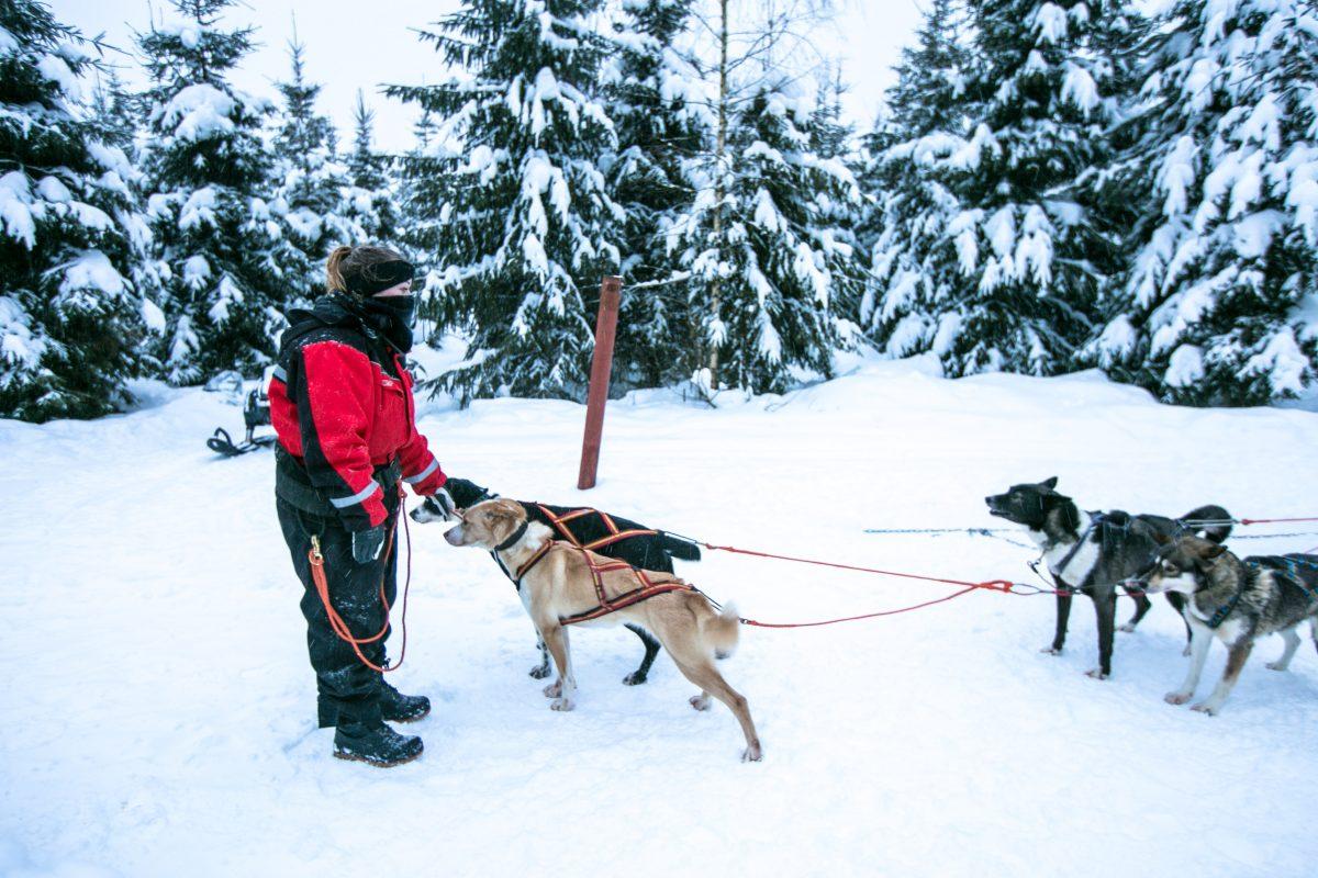 Finnland im Winter, Tipps, Vuokatti, Husky, Hundeschlitten fahren