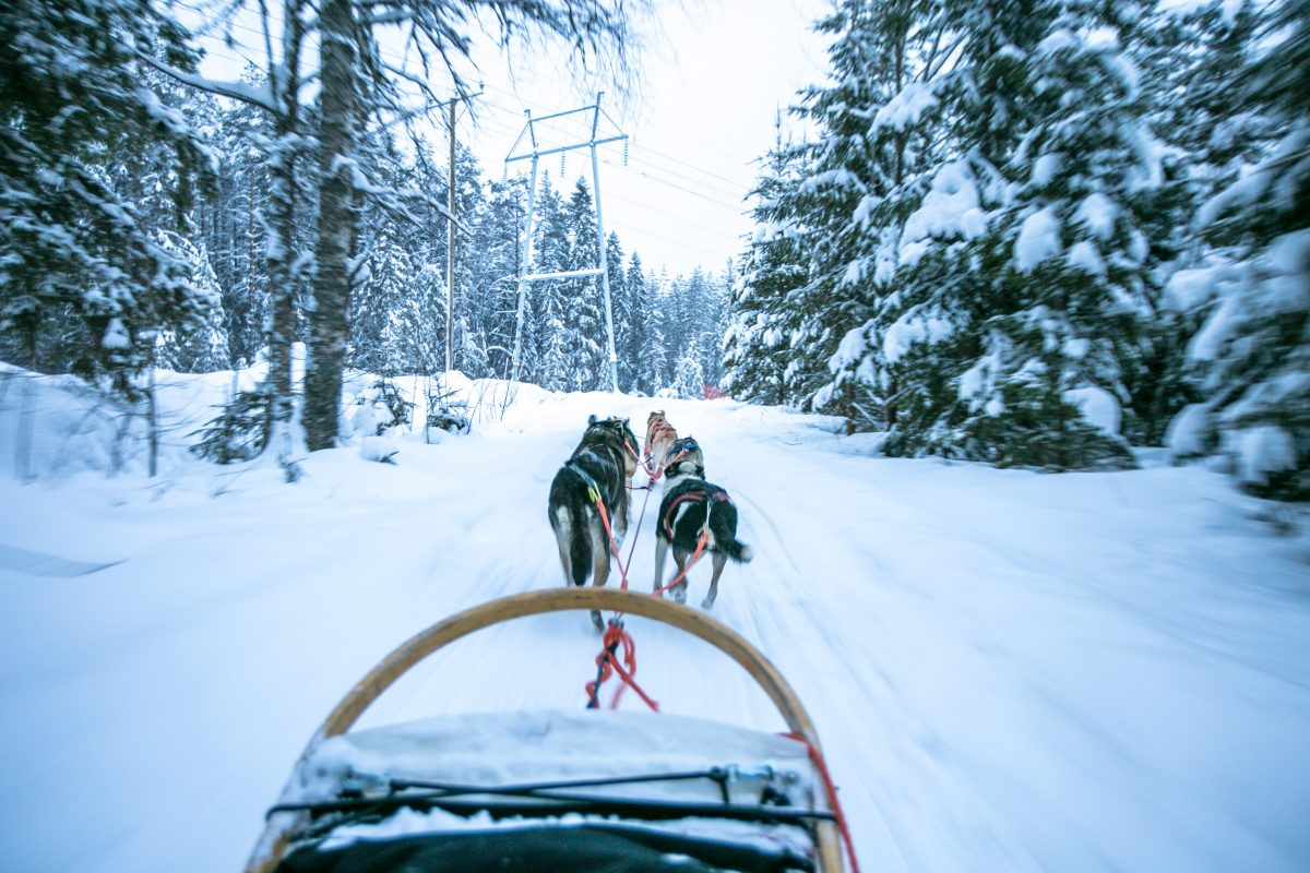 Winter in Finnland, Tipps, Vuokatti, Hundeschlitten, Huskyschlitten