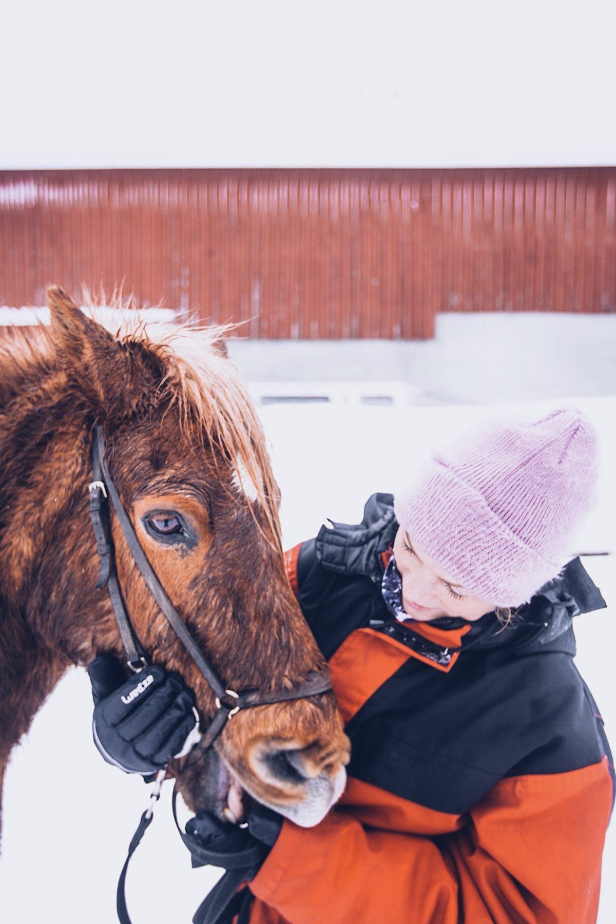 Finnland im Winter, Tipps, Koli, Islandpferde, Ausreiten im Schnee