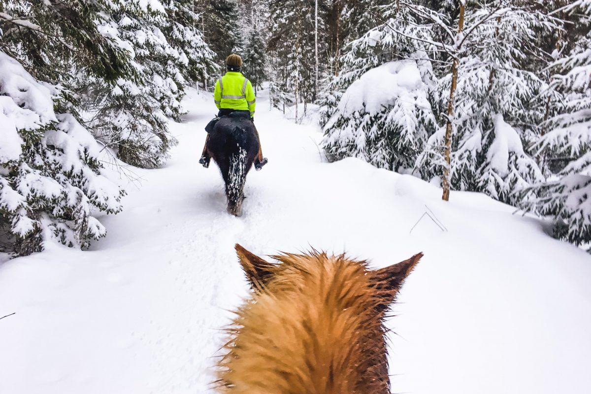 Finnland im Winter, Tipps, Islandpferde, Ausreiten im Schnee
