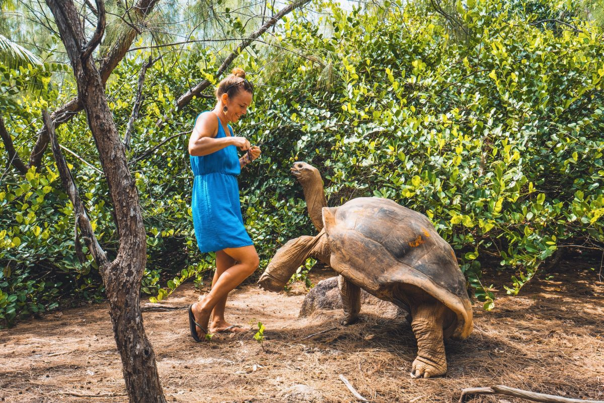 Moyenne Island, Seychellen