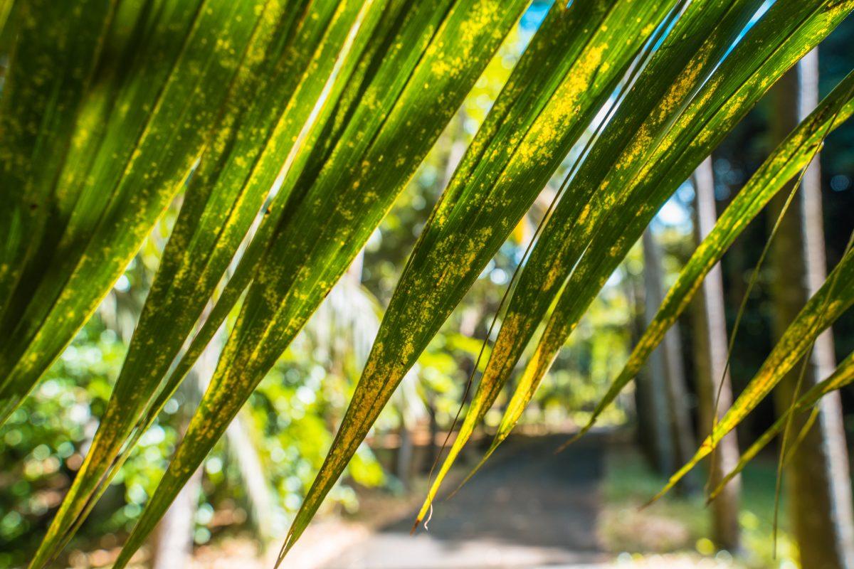 Sir Seewoosagur Ramgoolam Botanical Garden, Botanischer Garten Mauritius, Tipp, Roadtrip