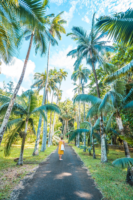 Botanischer Garten Mauritius, Mauritius Roadtrip