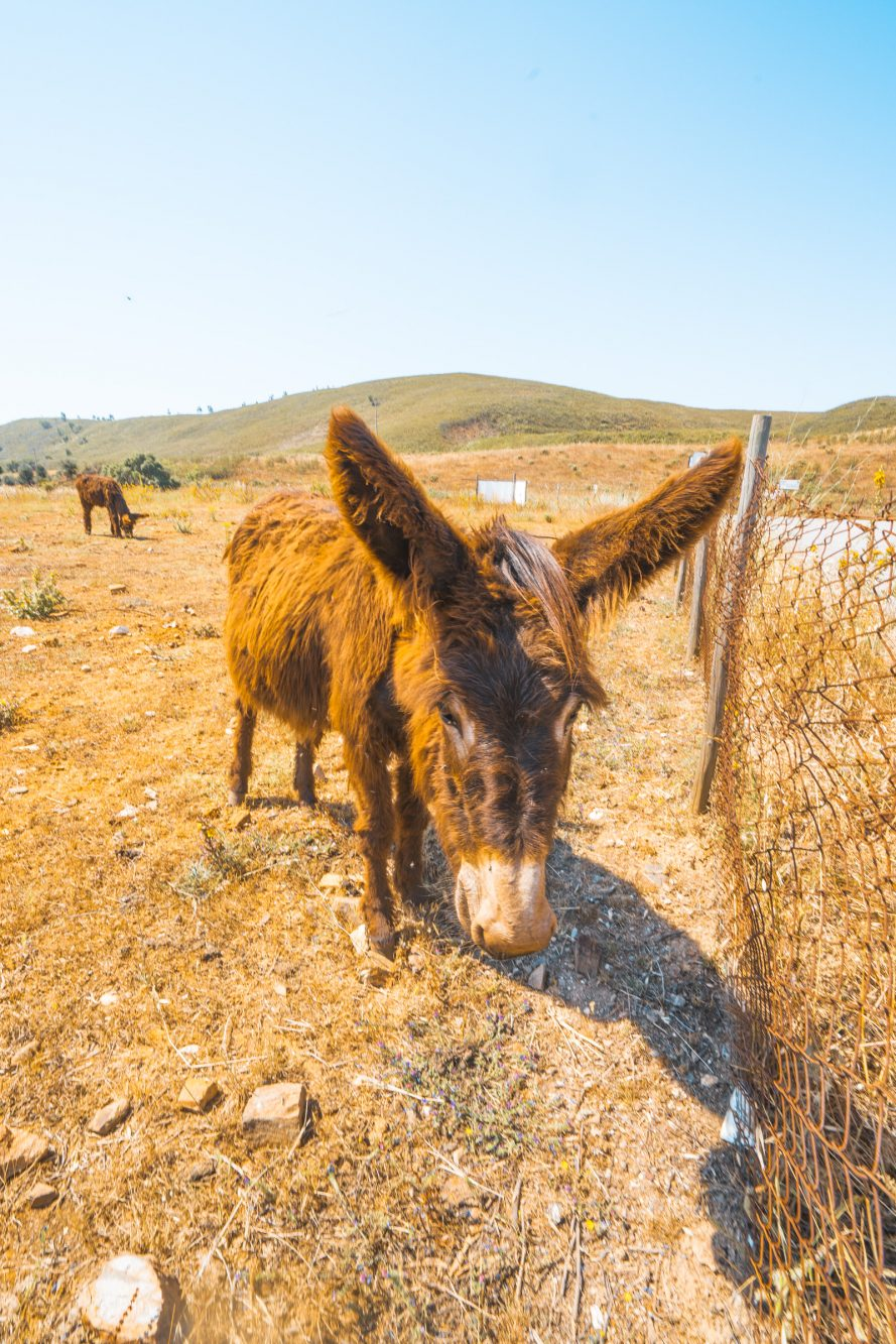Burroville Portugal, Unterkunft Algarve, Eselfarm