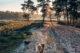 Maasduinen Nationalpark Holland, Niederlande Tipps, Holland mit Hund, Wandern